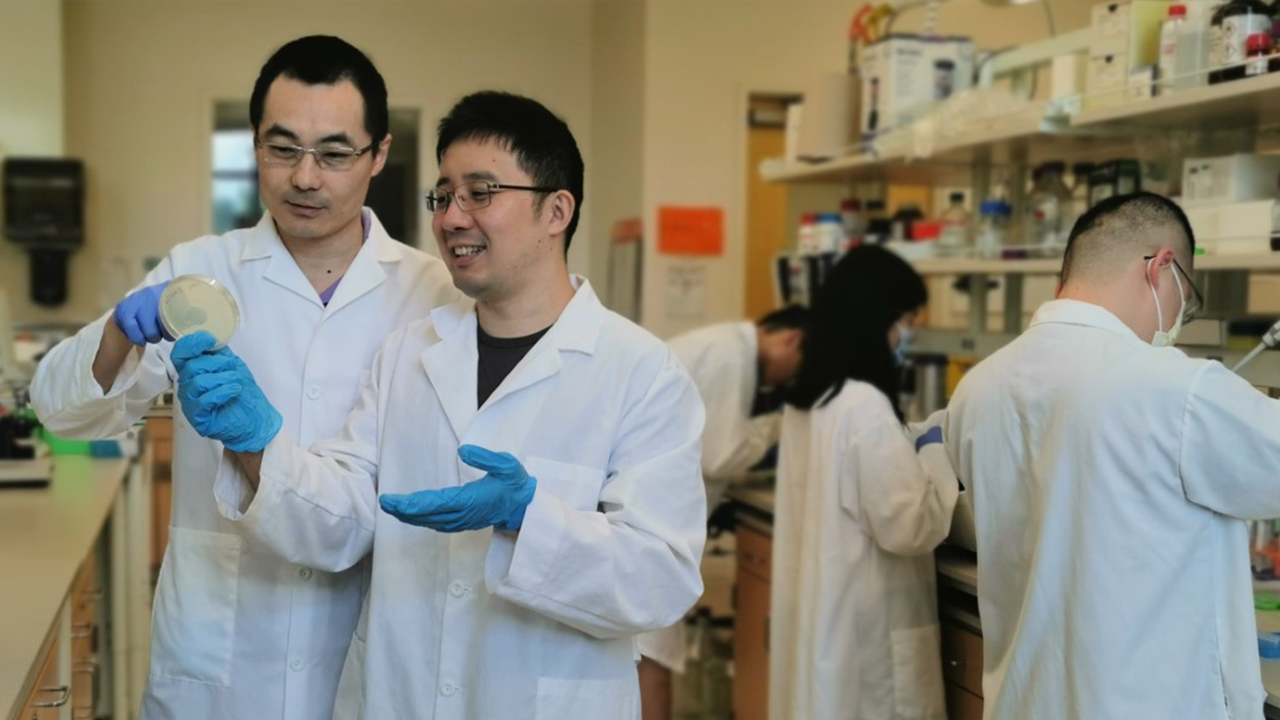 Yi Wang (left), associate professor in the Department of Biosystems Engineering, works with his post-doc Yuechao Ma in the lab. The research from Wang's lab for renewable fatty acid ester production has been recently published and highlighted by the journal of Nature Communications.